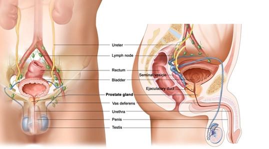 urologia2